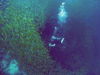 Gibt es Haie in Khao Lak? Das kommt ganz klar darauf, wo man sich in Khao Lak befindet.