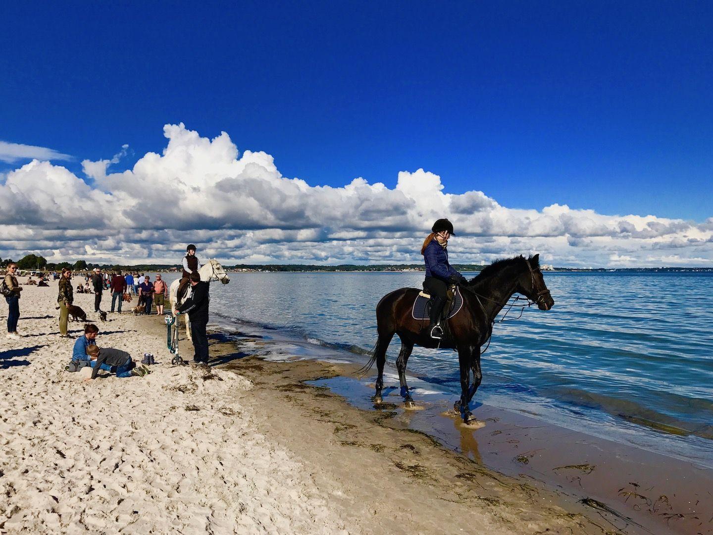 reiten am ostsee strand scharbeutz ist das mekka der pferde fans. Black Bedroom Furniture Sets. Home Design Ideas