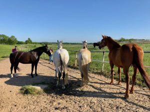 Rund um Scharbeutz gibt es zahlreiche Reiterhöfe, von denen aus Ihr Touren mit dem Pferd starten könnt. Foto: Sascha Tegtmeyer